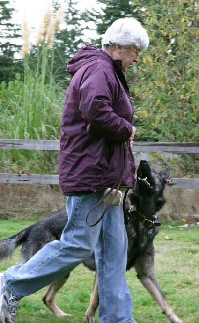 Vom Banach K9 Agililty and Competitive Obedience-On a Walk
