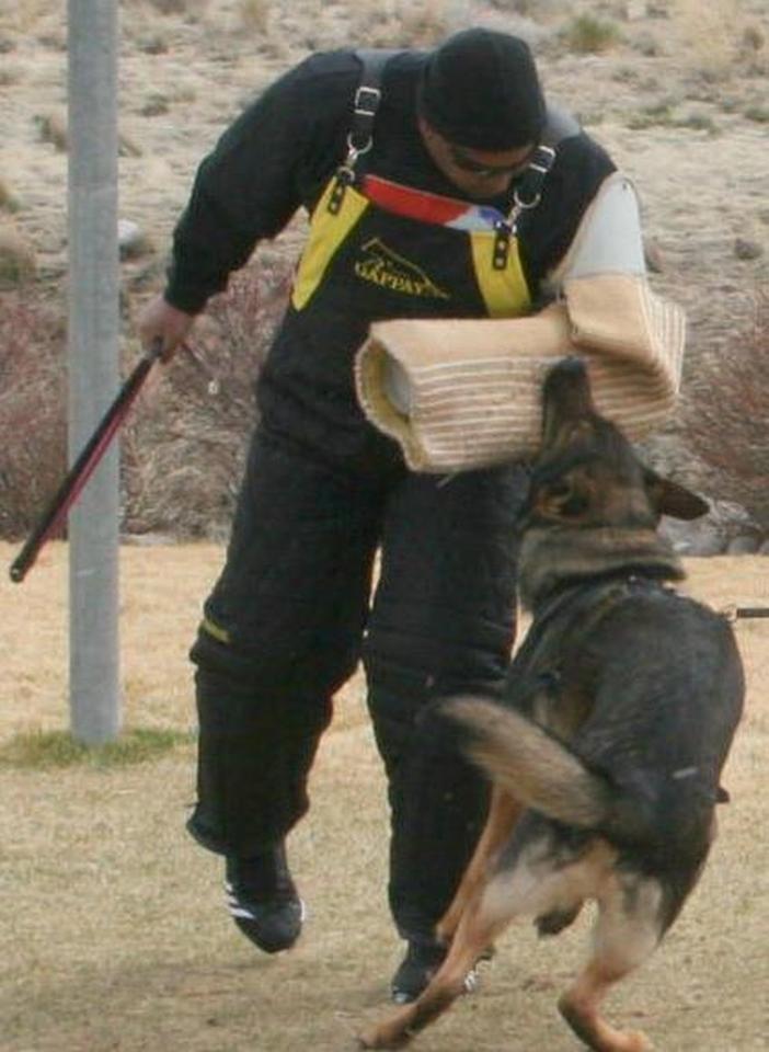 Panzer & Ane in Schutzhund Training | Vom Banach K9